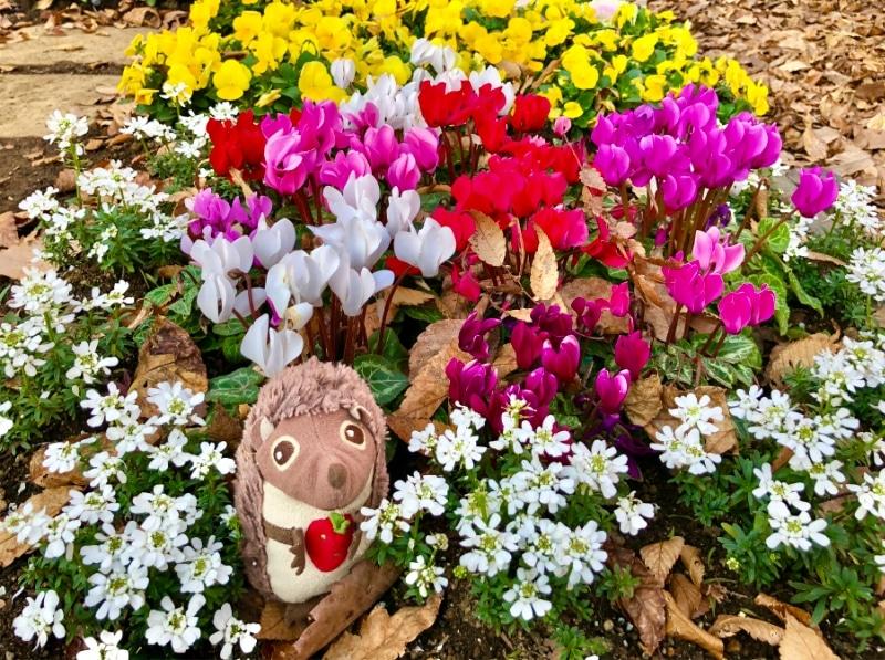 47 Blumenwiese