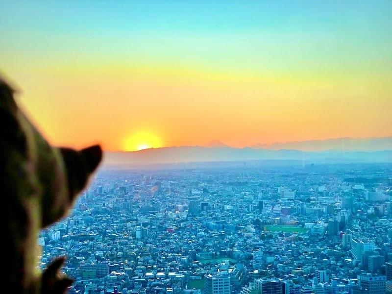 51 Aussicht auf Fuji