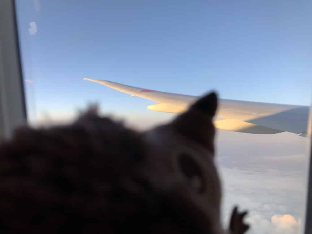 Flug von Frankfurt nach Tokyo