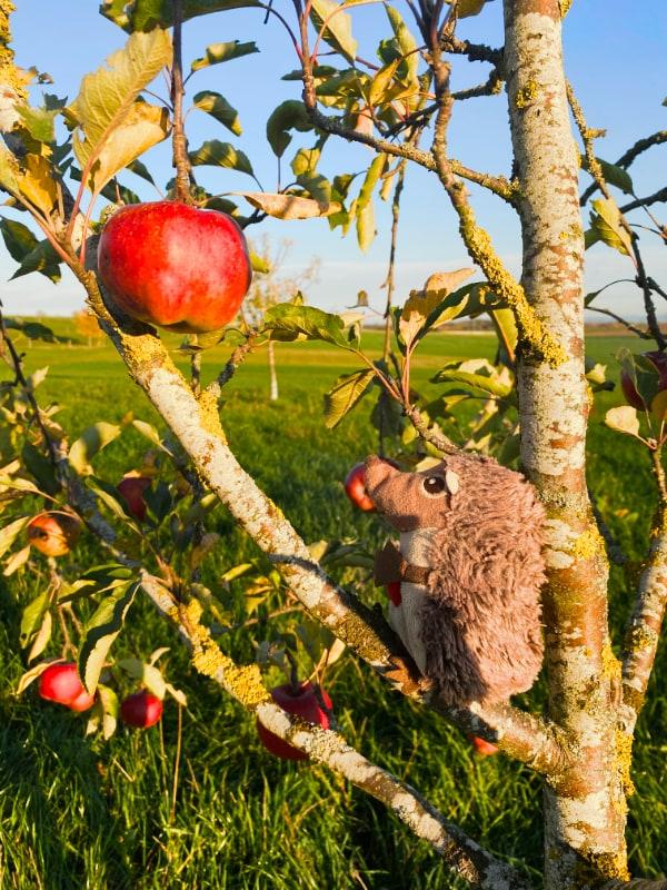Paula Igel auf dem Bauernhof Apfelbaum
