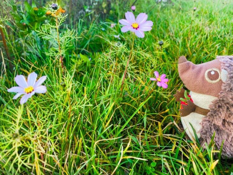 Paula Igel auf dem Bauernhof Blumenwiese