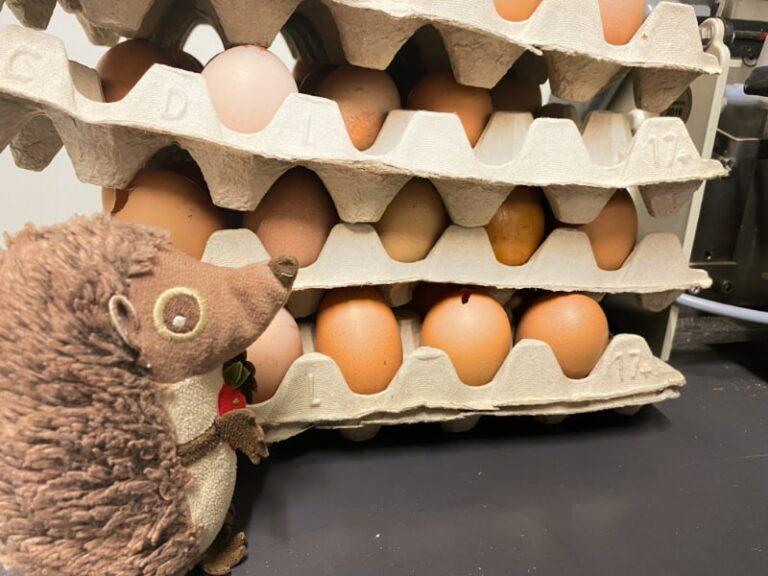 Paula Igel auf dem Bauernhof Eier
