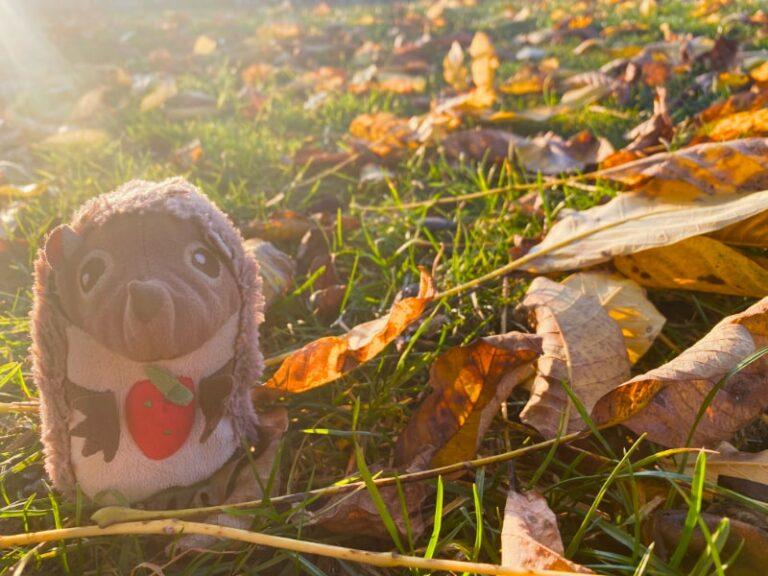 Paula Igel auf dem Bauernhof Herbstlaub