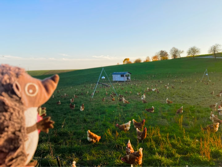 Paula Igel auf dem Bauernhof Hühner 2