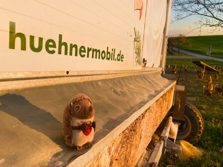 Paula Igel auf dem Bauernhof Hühnermobil